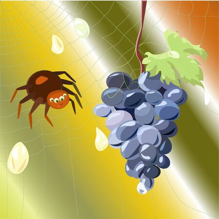 spider on the web wants to eat grapes