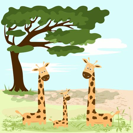 A family of giraffes near a large tree