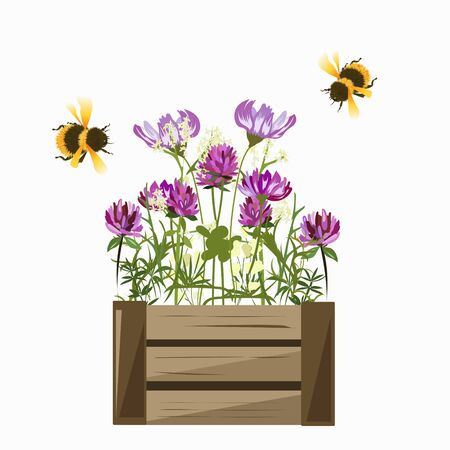 Two bees and a box with clover and cosmos flowers on a white background
