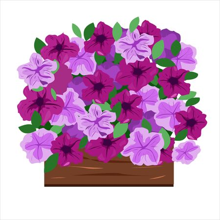 Petunias in the seedling box for planting in the ground