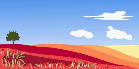 Landscape with a field of tulips of different colors
