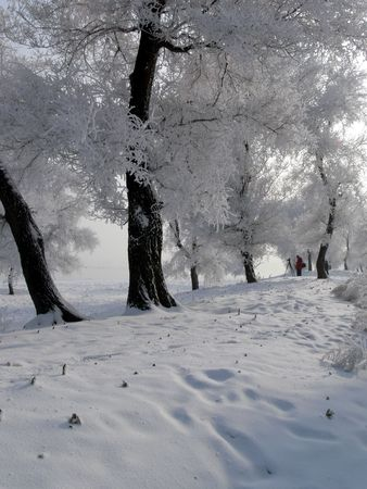 Winter time in Wusong Island, China.  Its really beautiful and the landscape reminds me of a winter wonderland.  Temperature can drop to about -20 Celsius.