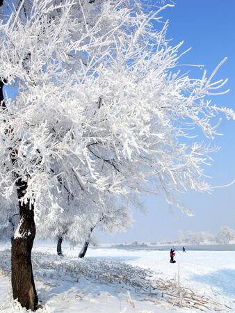 celsius: Frost, winter, cold, beautiful, landscape, nature, God, creation, blue, white, celsius, farenheit, trees, christmas, natural, amazing, lonely, quiet, awe, atmostphere. Stock Photo