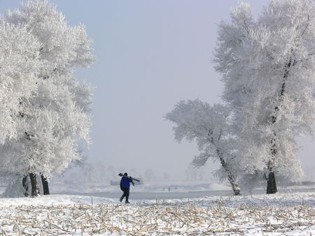 Frost, winter, cold, beautiful, landscape, nature, God, creation, blue, white, celsius, farenheit, trees, christmas, natural, amazing, lonely, quiet, awe, atmostphere. Stock Photo