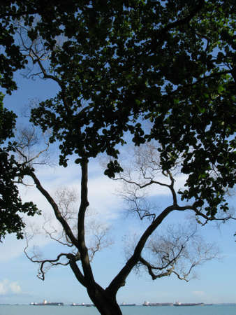 Branches and Twigs at the East Coast Park of Singapore