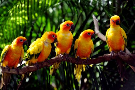 Colourful small parrots photographed in a bird park