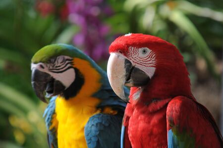 Macaws photographed in a bird park Archivio Fotografico