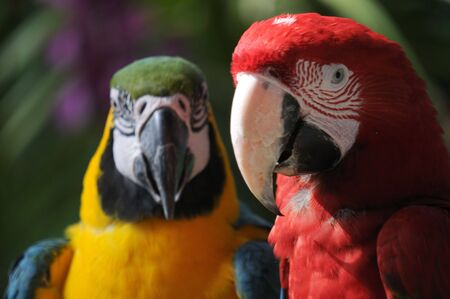 Macaws photographed in a bird park Stock Photo