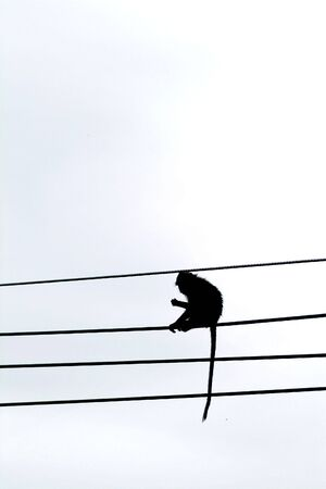 Monkey playing on wires