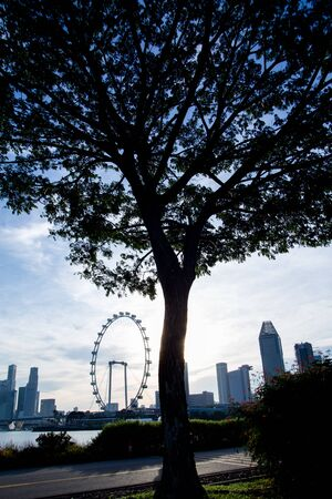 Silhouette of Tree with Singapore Flyer
