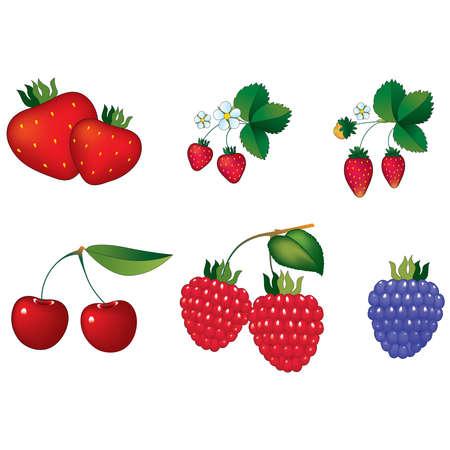 Types of berry Иллюстрация