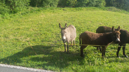donkeys on the field