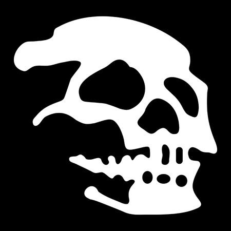 strange: White skull on black background
