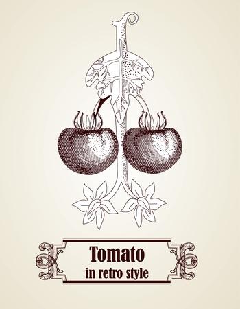 Hand drawn tomato Vector
