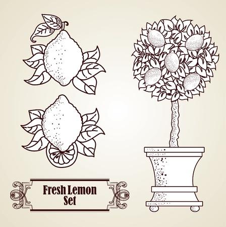 Lemon set in retro-stijl Vector Illustratie