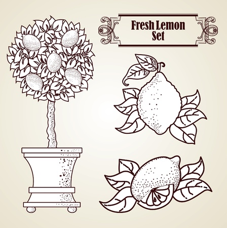 Lemon set in retro style Vector