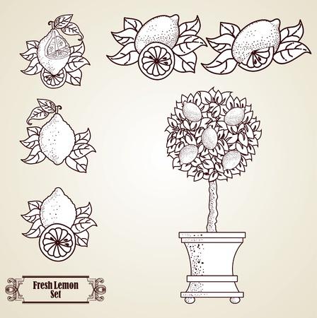 arboles blanco y negro: Lim�n conjunto en estilo retro