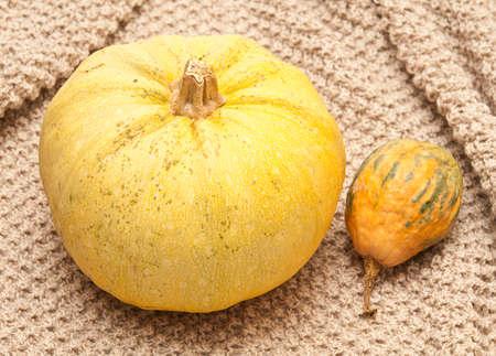 mini farm: Pumpkins on a fabric background Stock Photo