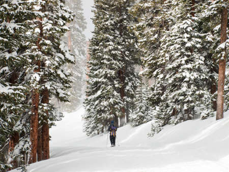 snowshoeing: Snowshoeing in the forest. Stock Photo
