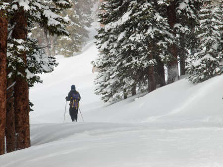 Snowshoeing in the forest. Stock Photo - 8857852