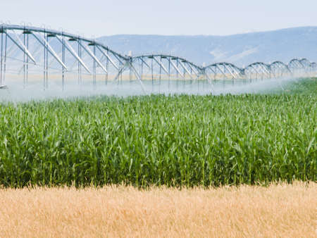 irrigation field: Circular irrigation system on the farm field.