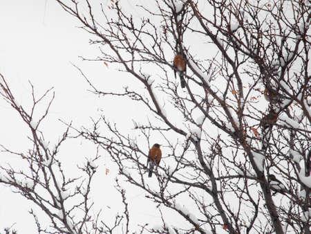 Birds in a snow tree. photo