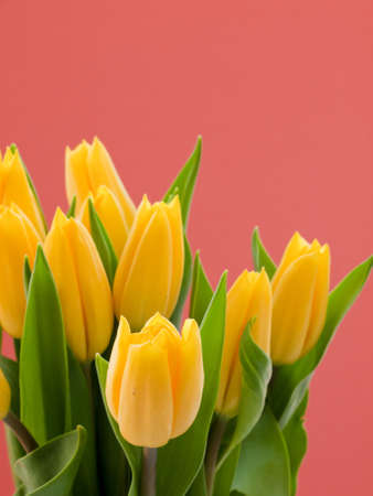 Springflowers in bouquet with color background. photo