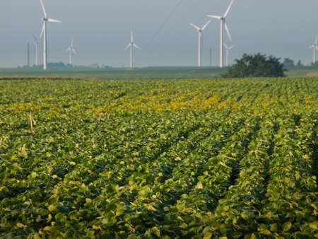 iowa: Wind turbines farm at sunrise in Iowa. Stock Photo