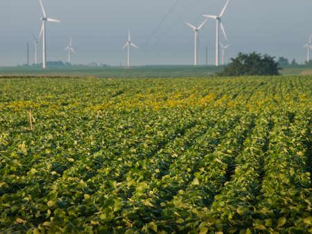 iowa: Wind turbines farm at sunrise in Iowa. Stock Photo
