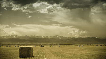 longs peak: Straw bales on farmland with blue cloudy sky. View of the Longs Peak, Colorado on the backgound.