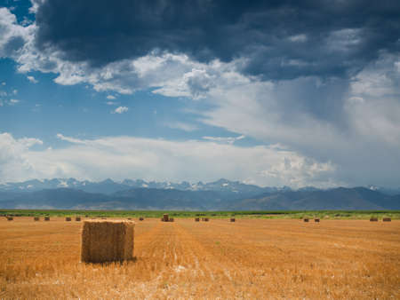 Straw bales on farmland with blue cloudy sky. View of the Longs Peak, Colorado on the background.