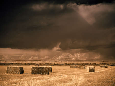 longs peak: Straw bales on farmland with blue cloudy sky. View of the Longs Peak, Colorado on the background. Editorial