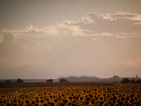 Sunflower field with Denver International Airport in the background. photo
