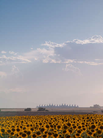 Sunflower field with Denver International Airport in the background. Stock Photo - 10318960