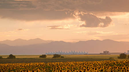 man made structure: Sunflower field with Denver International Airport in the background.