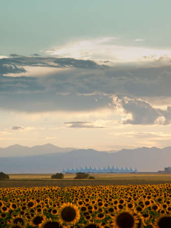 building feature: Sunflower field with Denver International Airport in the background.