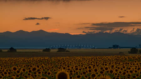 Sunflower field with Denver International Airport in the background. Stock Photo - 10311434