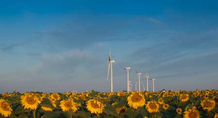 Wind turbines over a beautiful sunflowers field in Limon, Colorado. Stock Photo - 10366189