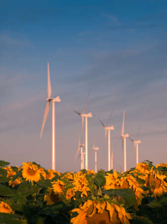 Wind turbines over a beautiful sunflowers field in Limon, Colorado. Stock Photo - 10366212