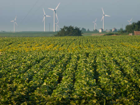 Wind turbines farm at sunrise in Iowa. Stock Photo - 10379405