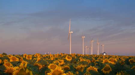 Wind turbines over a beautiful sunflowers field in Limon, Colorado. Stock Photo - 10379185