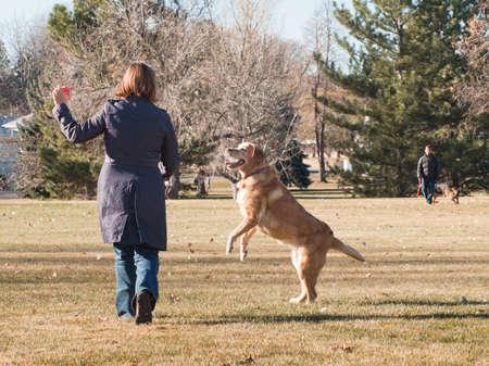 femme et chien: Femme jouant avec son chien dans le parc. Banque d'images