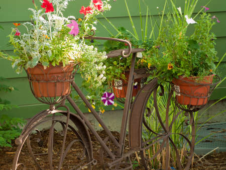 Decorative bicycle with flower pots.