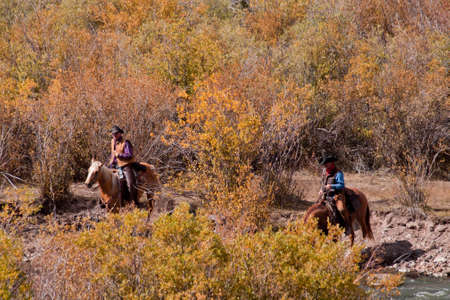 Cattle drive by two cowboys in Colorado.