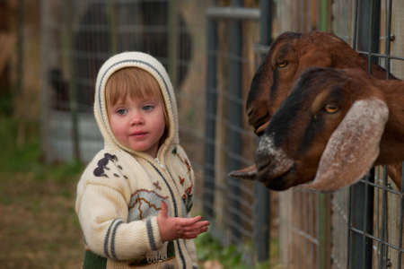 Boy toddler on the farm.