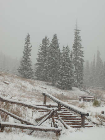 Winter forest at Rocky Mountain National Park. photo