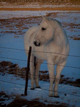 ouray: Horse on the ranch near Ouray, Colorado.