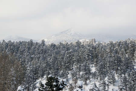 Winter forest near Evergreen, Colorado. photo