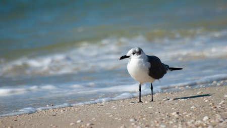 mexico beach: Seagull at Mexico Beach, Florida.
