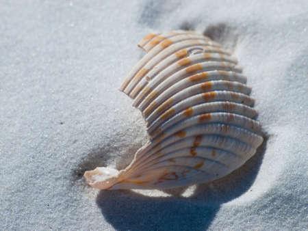 mexico beach: Ocean shell on Mexico Beach, Florida.
